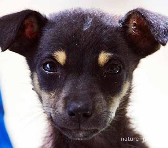 Puppy Dog Portrait