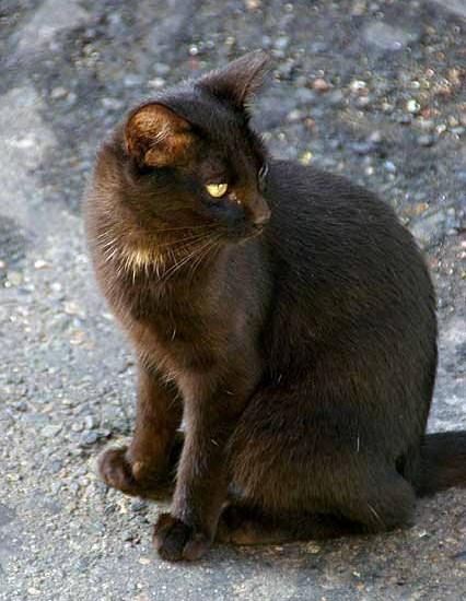 Black Cat Sitting Looking Back