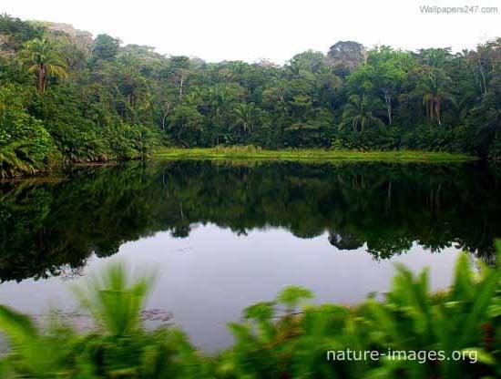 rain forest lake photo