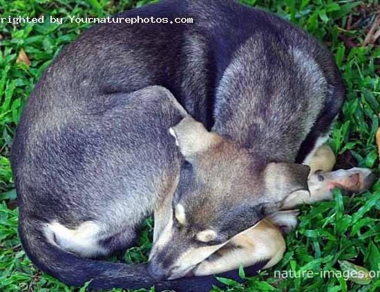Young dog sleeping