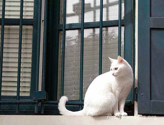 White Cat sitting in front of a window