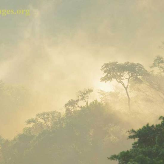 Cloud forest Morning Light