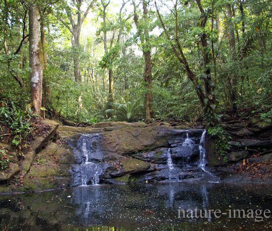 El Charco, Soberania National Park Panama