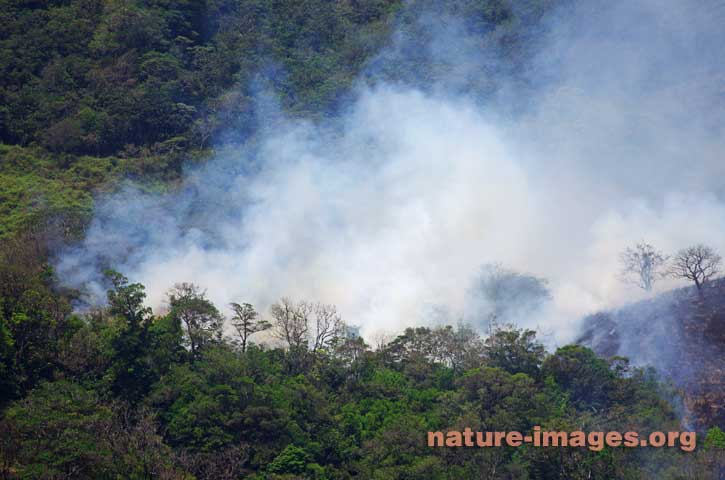 Forest Fire, trees and dry grass on fire