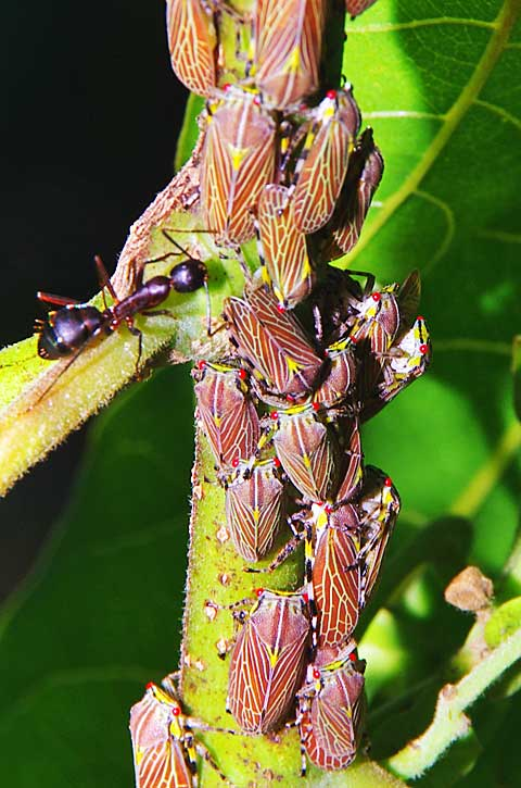 Insects Pest on a Tree