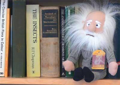 Charles Darwin doll