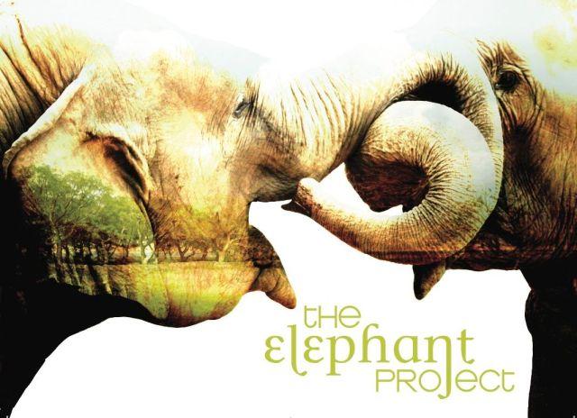 elephantproject6