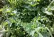 צמחי בר אכילים