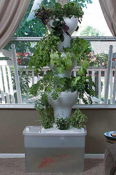 מערכת אקוואפוניקה אנכית ורטיקלית גידול ירקות בבית