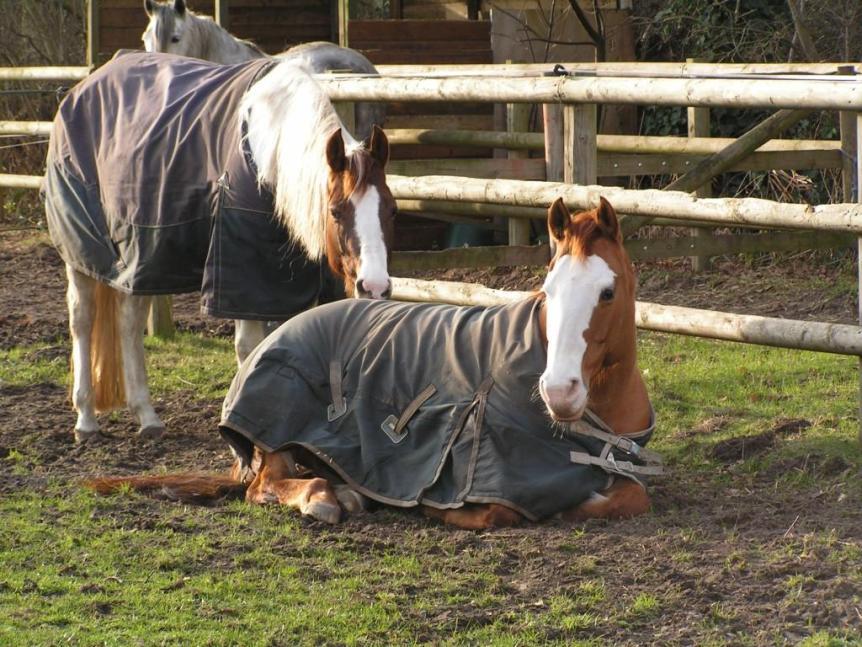 paarden wel of geen deken