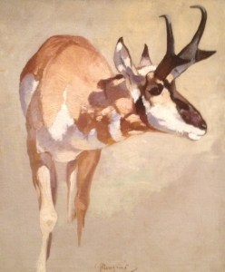 Pronhorn Deer study by Carl Runguis.