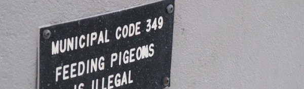 municipal ordinance- don't feed pigeons