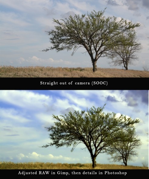 Tree Springs to life in Photoshop