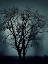 Genealogy & Halloween
