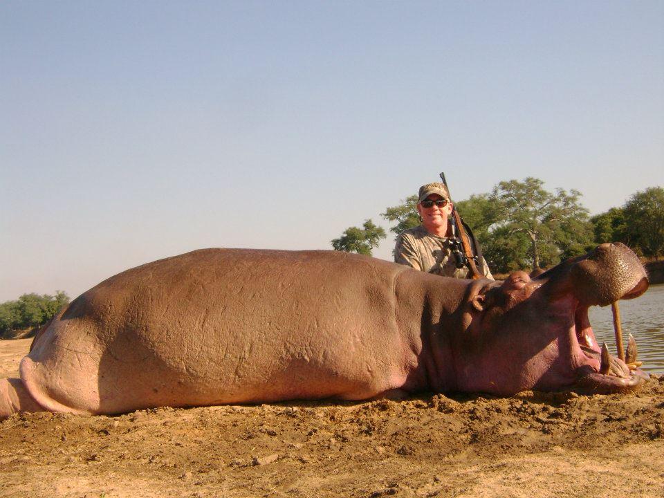 hippo-zambia