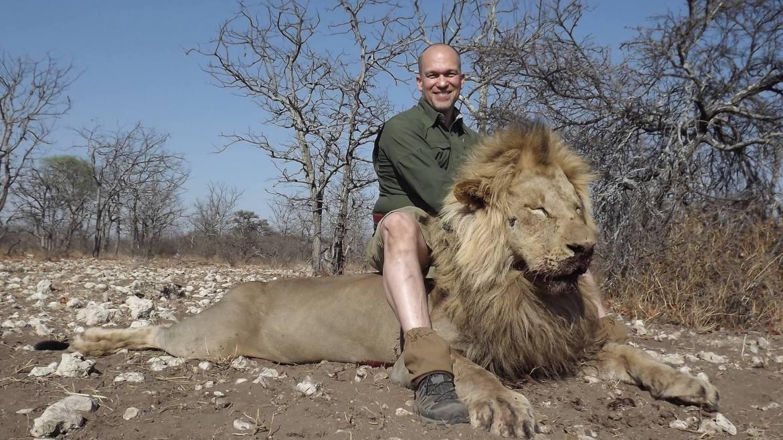 lion-africa