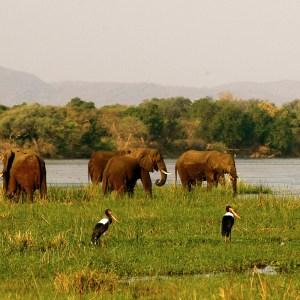 zambia-luangwa-valley