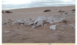 Horse Burial Site Swakopmund, Swakpmund travel, Swakopmund World War I, Swakopmund