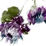 キャンバスに描いたような花(3パターン)