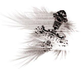 逆さ十字と翼(4パターン)