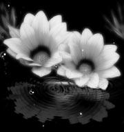 水に映る花(4パターン)