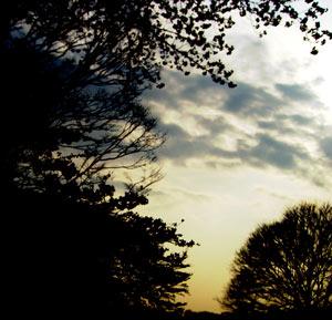 空と木の写真素材