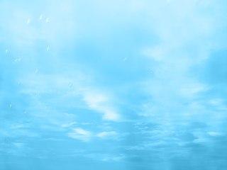 青い空に溶け込む鳥
