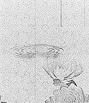 睡蓮と糸雨(8パターン)