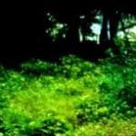 森の写真素材