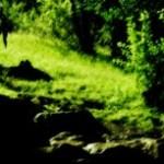 自然の写真素材