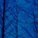 閑散とした冬枯れの木々