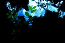 空と植物の写真素材
