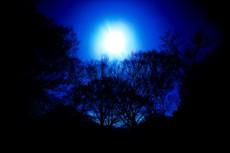 木と光輪の写真素材