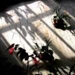 温室の植物と壁に伸びる長い影