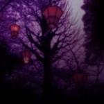 木と提灯の写真素材