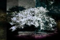 cover-flower002-2