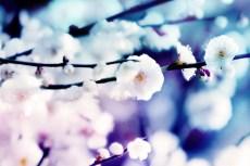 cover-flower005
