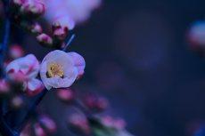 flower373