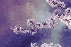 flower378-2