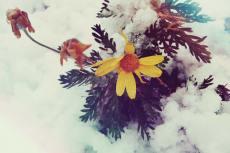 flower380