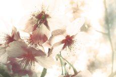 flower386-3