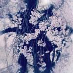 【高解像度】枝垂れ桜・万朶乃花(3パターン)