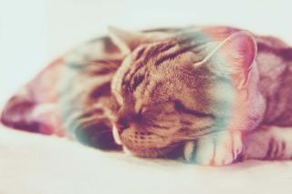 【高解像度】気持ち良さそうに眠る猫(アメリカンショートヘア)(3パターン)