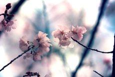 flower410