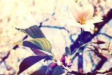 flower402-2
