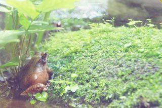 【高解像度】ハート型の葉の上で休むカエル(3パターン)