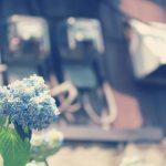 【高解像度】家屋の裏口に咲く紫陽花(アジサイ)(3パターン)