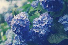 flower466