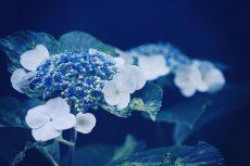 flower472