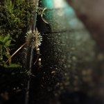 【高解像度】雨に濡れた道とタンポポ